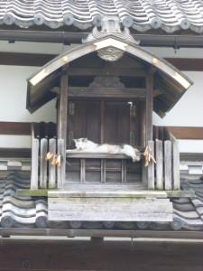 岸田家の猫